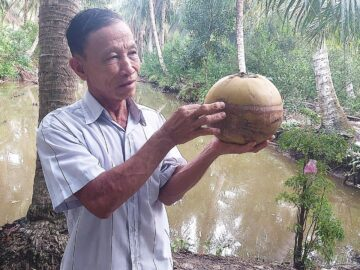 Nguyen Van Ra, A pioneer in our Organic project and the farmer who has the largest area as well shared his insights into the effectiveness of the natural enemy bees after applying for his coconut farm